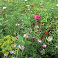 """Prairie fleurie """"Papillon Vivaces"""""""