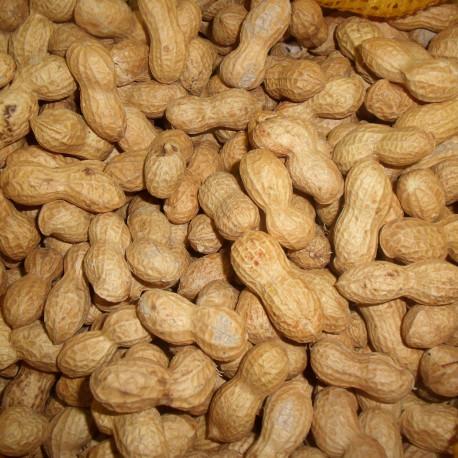 Arachides (cacahuètes)