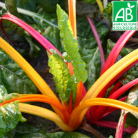 Poirée Five Colours Bio