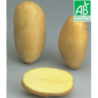 Pomme de terre Manon BIO