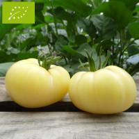 Tomate Beauté Blanche Bio