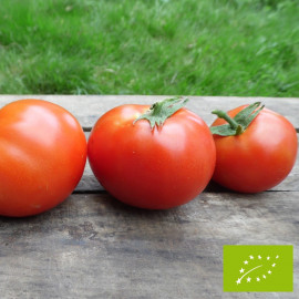 Tomate Burbank Bio