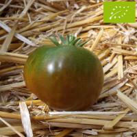 Tomate Noire Russe Charbonneuse Bio