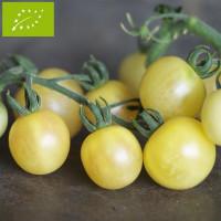Tomate Mirabelle blanche Bio