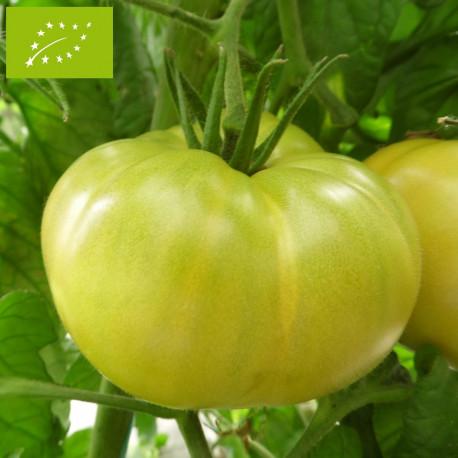 Tomate Evergreen Bio