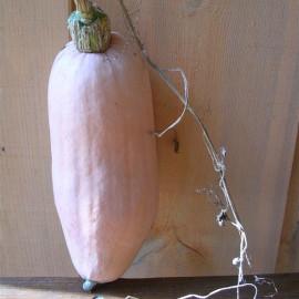 Courge Pink Banana Jumbo