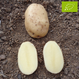 Pomme de terre Eden BIO