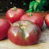 Tomate Cherokee Purple
