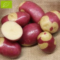 Pomme de terre Pink Gypsy BIO