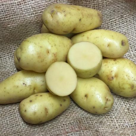Pomme de terre Sarpo Kifli