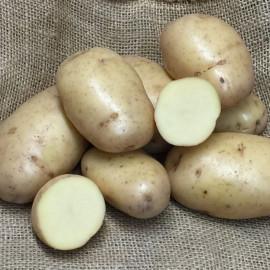 Pomme de terre Sarpo Shona