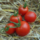 Tomate Glacier Bio