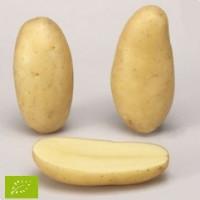 Pomme de terre Celtiane BIO