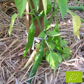 Piment de Cayenne Bio