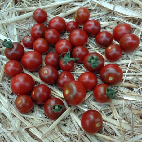 Tomate Garnet