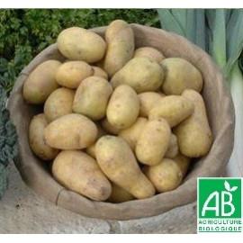 Pomme de terre Margod BIO