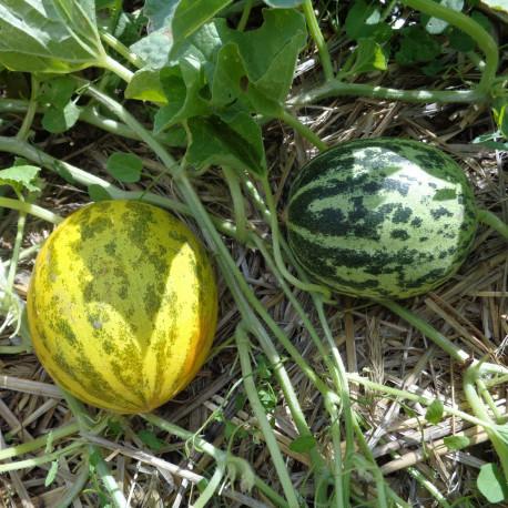 Melon SuperBall