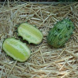 Concombre du Kenya (Kiwano)