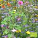 Fleurs Abeilles et Cie Bio