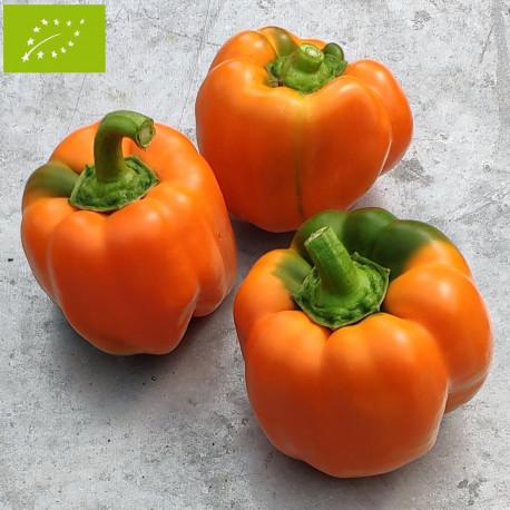 Poivron Cubo orange Bio