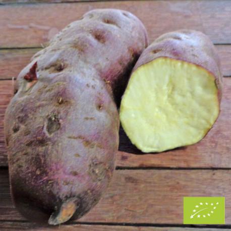 MURASAKI BIO - Patate Douce en godet pré-poussé