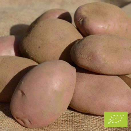 Pomme de terre Sarpo Axona Bio