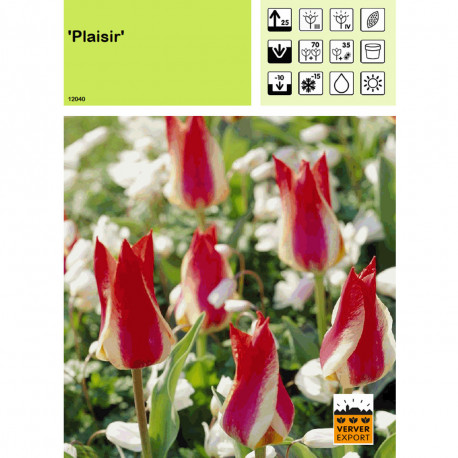 Tulipe Plaisir