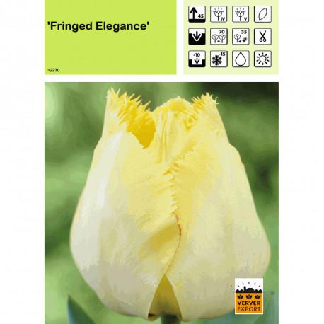 Tulipe Fringed Elegance