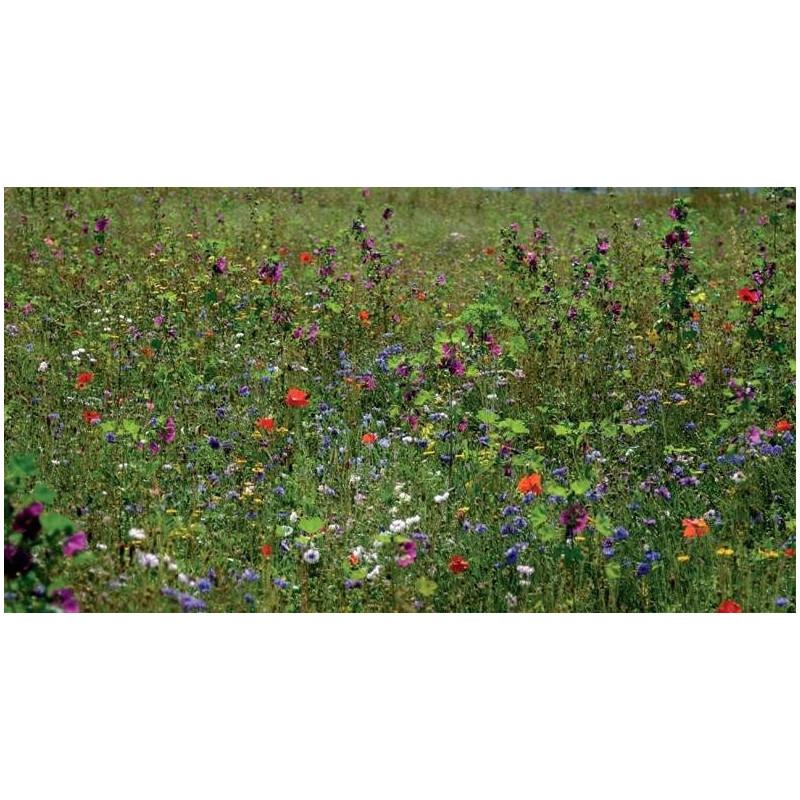 Dix semaine grand stock fleuri mélanger 100 graines-annuelles et bisannuelles